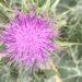 Flor de Cactus en Vacarisses