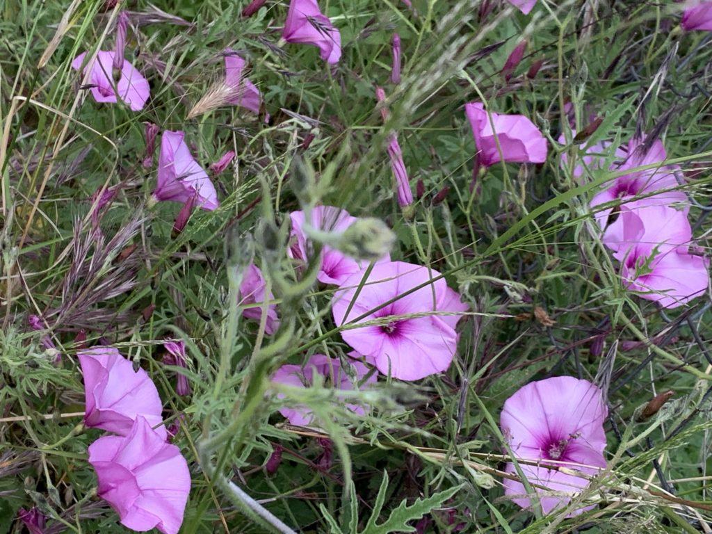 Flores de Vacarisses